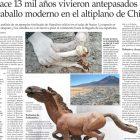 Hace 13 mil años vivieron antepasados del caballo moderno En el antiplano de Chile
